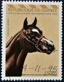 REPUBLIC OF GUINEA - CIRCA 1995: A stamp printed in Republic of Guinea shows Arabian horse, circa 1995 — Stock Photo