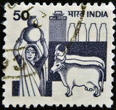 INDIA - CIRCA 1965: A stamp printed in India shows Woman with a jug of milk and cows, circa 1965 — Foto de Stock
