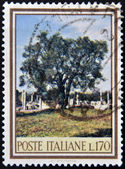 ITALY - CIRCA 1965: A stamp printed in Italy dedicated to forest biodiversity, shows an olive tree, circa 1965 — Stock Photo