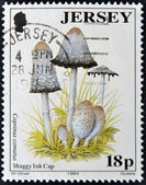 JERSEY - CIRCA 1994: A stamp printed in Jersey shows coprinus comatus (shaggy ink cap), circa 1994 — Stock Photo