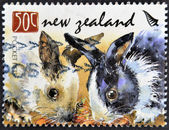 NEW ZEALAND - CIRCA 2008: A stamp printed in New Zealand shows pocket pets, circa 2008 — 图库照片
