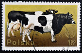 POLAND - CIRCA 1975: stamp printed in Poland, shows cow, circa 1975. — Stock Photo