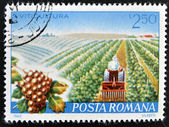 ROMANIA - CIRCA 1982: A stamp printed in Romania dedicated to viticulture, circa 1982 — Stock Photo
