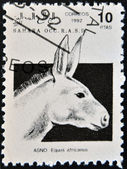 SAHARA - CIRCA 1992: A stamp printed in Sahrawi Arab Democratic Republic (SADR) shows African Wild Ass (Equus africanus), circa 1992 — Stock Photo