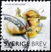 SWEDEN - CIRCA 2009: A stamp printed in Sweden shows garlic, circa 2009 — Stockfoto