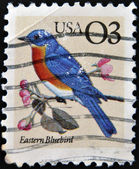 UNITED STATES - CIRCA 1996: A stamp printed in USA shows Eastern Bluebird, circa 1996 — Stock Photo