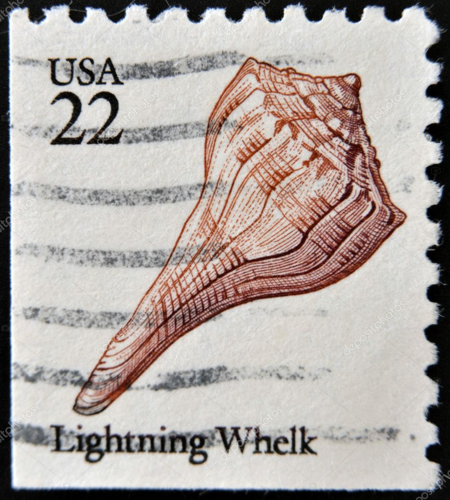 UNITED STATES OF AMERICA - CIRCA 1985: A stamp printed in USA shows Lightning whelk (Busycon contrarium), circa 1985 — Stock Photo #9452282