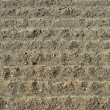 Plowed soil — Stock Photo #9850451