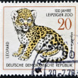 GERMANY - CIRCA 1978: A stamp printed in Germany shows leopard, circa 1978 — Stock Photo