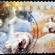 AUSTRALIA - CIRCA 1998: A stamp printed in Australia shows flock of sheep, circa 1998 — Stock Photo