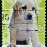 AUSTRALIA - CIRCA 2004: stamp printed by Australia, shows Labrador retriever, circa 2004 — Stock Photo #9850659