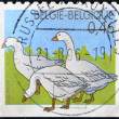 BELGIUM - CIRCA 2006: A stamp printed in Belgium shows three white ducks, circa 2006 — Stock Photo