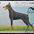 Stock Photo: CUB- CIRC1992: stamp printed in Cubshows doberman, circ1992