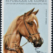 REPUBLIC OF GUINEA - CIRCA 1995: A stamp printed in Republic of Guinea shows Arabian horse, circa 1995 — Stock Photo