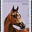 REPUBLIC OF GUINE- CIRC1995: stamp printed in Republic of Guineshows Arabihorse, circ1995 — Stock Photo #9851152