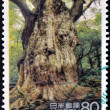 Stock Photo: JAPAN - CIRC1995: stamp printed in Japshows Jomon cedar of YakushimIsland, cryptomerijaponica, circ1995