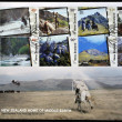 Royalty-Free Stock Photo: NEW ZEALAND - CIRCA 2004: postcard printed in New Zealand, shows Scenes from The Lord of the Rings, circa 2004