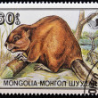 MONGOLIA - CIRCA 1989: A Stamp printed in Mongolia shows image of a beaver (Castor fiber birulai), circa 1989 — Stock Photo