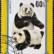 MONGOLIA - CIRCA 1977: A stamp printed in Mongolia shows the female and baby panda, circa 1977 — Stock Photo