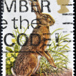 Royalty-Free Stock Photo: UNITED KINGDOM - CIRCA 1979: A stamp printed in Great Britain shows Rabbit, circa 1979