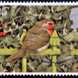 GREAT BRITAIN - CIRCA 1995: A stamp printed in United Kingdom shows image of a robin, circa 1995 - Stock fotografie