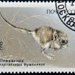 "USSR - CIRC1985: Stamp printed in Russishows image of Endangered Animal With inscription ""Cardiocranius paradoxus"", circ1985 — Stock Photo #9852683"