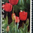 AUSTRALIA - CIRCA 1994: A stamp printed in Australia shows Tulips, thinking of you, circa 1994 — Stock Photo