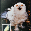CHINA - CIRCA 1995: A postcard printed in China shows snowy owl, circa 1995 — Stock Photo