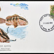 SAINT KITTS AND NEVIS - CIRCA 1991: A stamp printed in St Kitts shows a nassau grouper, circa 1991 - Stock Photo