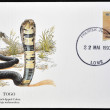 TOGO - CIRCA 1990: A postcard printed in Togo shows black-lipped cobra, naja melaneuloca, circa 1990 - Stock Photo