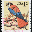 UNITED STATES OF AMERICA - CIRCA 2000: A stamp printed in the USA shows American Kestrel - Falco sparverius, circa 2000 — Stock Photo