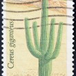 UNITED STATES OF AMERICA - CIRCA 1981: A stamp printed in USA shows a Saguaro, circa 1981 — Stock Photo