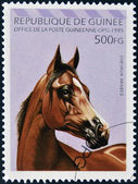 REPUBLIC OF GUINEA - CIRCA 1995: A stamp printed in Republic of Guinea shows Arabian horse, circa 1995 — 图库照片