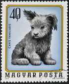 HUNGARY - CIRCA 1974: A stamp printed in Hungary shows Canis Familiaris, circa 1974 — Stock Photo