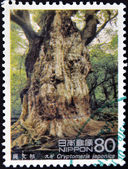 JAPAN - CIRCA 1995: A stamp printed in Japan shows Jomon cedar of Yakushima Island, cryptomeria japonica, circa 1995 — Stock Photo