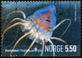 NORWAY - CIRCA 2004: A stamp printed in Norway shows a periphylla, circa 2004 — Stock fotografie