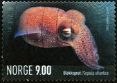 NORWAY - CIRCA 2004: A stamp printed in Norway shows a sepiola atlantica, circa 2004 — Stock Photo