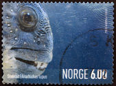 NORWAY - CIRCA 2004: A stamp printed in Norway shows anarhichas lupus, circa 2004 — Stock Photo