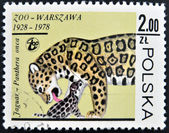 POLAND - CIRCA 1978: A stamp printed in Poland shows a Panthera onca, circa 1978 — Stockfoto