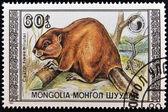 MONGOLIA - CIRCA 1989: A Stamp printed in Mongolia shows image of a beaver (Castor fiber birulai), circa 1989 — Stock Photo