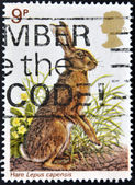 Wielka brytania - około 1979: znaczek wydrukowany w wielkiej brytanii pokazuje, królik, około 1979 — Zdjęcie stockowe