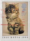 Wielka brytania - circa 1990: znaczek wydrukowany w anglii wyświetlono kota, circa 1990 — Zdjęcie stockowe