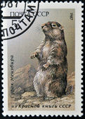 USSR - CIRCA 1987: A stamp printed in Russia shows marmot, circa 1987 — Stock Photo