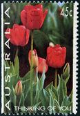 AUSTRALIA - CIRCA 1994: A stamp printed in Australia shows Tulips, thinking of you, circa 1994 — Foto Stock