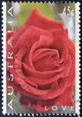 AUSTRALIA - CIRCA 1994: A stamp printed in austrlia shows a rose, love, circa 1994 — 图库照片