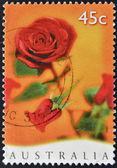 AUSTRALIA - CIRCA 1997: Stamp printed in Australia shows rose, circa 1997 — Stock Photo