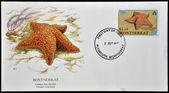 MONTSERRAT - CIRCA 1999: A postcard printed in Monserrat shows cushion star starfish, oreaster reticulatus, circa 1999 — Foto de Stock