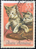 ROMANIA - CIRCA 1965: stamp printed by Romania, show Kittens, circa 1965. — Stock Photo