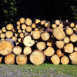 Stacked logs and trunks ready for sawing — Stock Photo #8598864