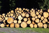 Stacked logs and trunks ready for sawing — Stock Photo
